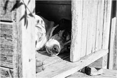 Oggi vi presento Noemi (andaradagio) Tags: andaradagio bianconero bw canon dog cane miglioramicodelluomo nadiadagaro rifugioohana bandaa4zampeumbria littledoglaughednoiret