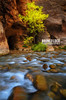 Lonesome (Bronco Loco) Tags: zionnationalpark southernutah narrows stgeorge sandstone virginriver