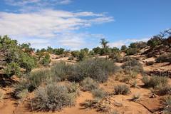 IMG_0130 (tecumseh1967) Tags: 2017 canyonsland mesaarch nationalpark rotel usa wanderreise