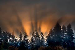 Rising Trees (jeanmarie's photography) Tags: sky sunrise shadows jeanmarieshelton trees clouds orange autumn foggy fall morning moody nikon nikond810