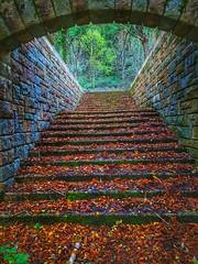 My autumn....🍁 (carlesbaeza) Tags: autumn otoño tardor naturaleza nature love escalera upstairs ngc catalunya catalonia travel