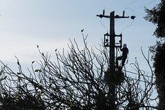 Power Cut (Daniel Arrhakis) Tags: mora powercut electricity edp portugal