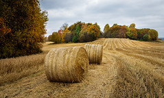 Autumn colours (tods_photo) Tags: ifttt 500px autumn trees leaves field sky fall farm colours harvest