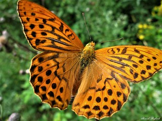 Butterfly 1456