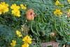 Amixedbush (hollyabbie) Tags: southcoastbotanicgarden lumix panasonic oneshot nature garden