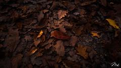 Autumn Colors (MHPhotography91) Tags: autumn colors landscape wide angle outdoor mood c canon canon6d mhphotography belgium forest