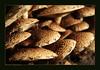 Stapelen... (♥ Annieta ) Tags: annieta september 2017 sony a6000 nederland netherlands tgooi baarn lagevuursche paddestoel paddenstoel mushroom fungus fungi bos wood trees autumn herfst allrightsreserved usingthispicturewithoutpermissionisillegal