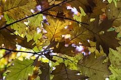 Birgeler Urwald (*Photofreaks*) Tags: birgeler urwald premiumwanderweg nordrheinwestfalen northrhinewestphalia nrw forests woods trees autumn fall adengs wwwphotofreakseu hiking landscapes