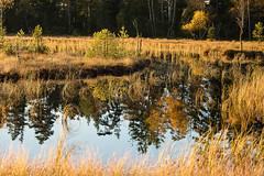 Black Forest (wolfgang.brinken) Tags: schwarzwald black forest deutschland germany lake wildsee sunrise sony a7r2 wolfgang brinken canon70200mmis40