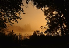 Steamy Sunrise (RWGrennan) Tags: sunrise steam fog mist tree lake reichardslake reichards nikon d610 rwgrennan rgrennan ryan grennan water silhouette leaves fall morning golden nature landscape window dawn