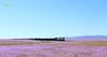 Desierto Florido (Rodrigo yañez) Tags: ferronor gt26ac tren del desierto florido 2017 chiledesiertodeatacama deserttrains ferrocarriles
