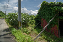 Every part was doing their best. (Yasuyuki Oomagari) Tags: shed red bar flower white yellow pole cloud weed country countryside roadside nikon d810 zeiss distagont2821 sunny light composition