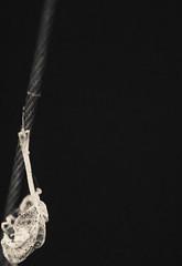 (C-47 [Offline]) Tags: onblack mono monochrome blackwhite blackandwhite blanc black noiretblanc noir noirblanc composition art artistic artists artistique amazing zen singleleaf leaves flora outofnature flickr feel feelings fun closeup macro themacrogroup minimalisminnature minimalism minimal helios44258mm vintage primelense prime imagination mysterious mystery mystic beautiful beauty onecolor original effects details depth