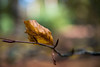 Autumn New Forest 2017 (Mike.Pursey) Tags: autumn new forest pentax k1 sigma 2470mm hsm dg