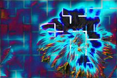 Cuarteada (seguicollar) Tags: dalias dahlia flower flores flor azul rojo red negro noir black imagencreativa photomanipulación art arte artecreativo artedigital virginiaseguí vegetal vegetación
