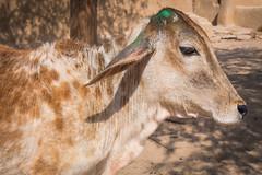 Rajasthan - Jaisalmer - Desert Safari traditional villiage-6