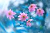 Untitled (Suresh V Raja) Tags: flower blue bokeh nature forest nikon suresh chennai tamilnadu india sureshcprog sureshphotography d5300