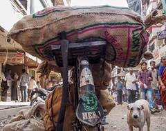 Mumbai 2015 (hunbille) Tags: india mumbai bombay birgittemumbai2lr zaveri bazaar zaveribazaar bazar market dog bicycle