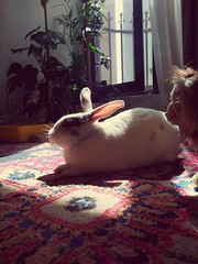 Sunbathing! (Mohammad Nick) Tags: bunnies bunny rabbit htc htcm9plus htconem9plus