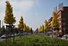 2017 Baumallee zur EZB mit ökologischer Bepflanzung (mercatormovens) Tags: frankfurt frankfurtammain ostend stadt ökologie allee baumallee ezb wildwiese herbst