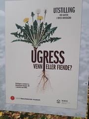 Weeds: friend or foe - Korsmo's weed charts, Oslo Botanical Gardens (MacP2007) Tags: korsmo oslobotanicalgardens urgress weeds