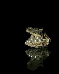 stroke of luck (brescia, italy) (bloodybee) Tags: oyster seashell shell pearl jewel luck stilllife reflection break humor fun black food