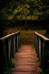 Old Bridge (patrivega1) Tags: puente bridge ucieda 50mm yongnuo 350d cantabria spain forest bosque otoño fall