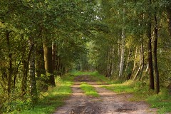 summer moods (JoannaRB2009) Tags: summer mood light sunlight sunlit green path road tree trees birch alley avenue nature natural sand sandy dirt miliczponds stawymilickie dolinabaryczy dolnyśląsk polska poland