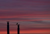 sentinel approves (immaculate_convergence) Tags: bird chimneys heating season autumn sunset sky red urban minimalist