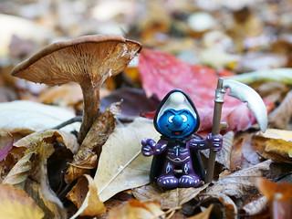 Vorsicht beim Pilze sammeln!