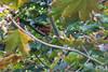 Salut toi ! (tristan_berberg) Tags: nature bretagne écureuil roux squirel érable