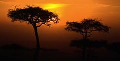 Kenya sunrise (Dreaming of the Sea) Tags: africa kenya sunrise trees safarilive orange 1500v60f smileonsaturday vividorange landscape sky