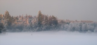 One frozen lake, some conifers and a little mist in the winter sunshine