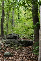 Sourlands Trails (Ashley Mather) Tags: america usa newjersey jersey sourlands sourlandmountainpreserve woodland forest mountain wildlife nature landscape photography panasonic lumix gh4 travel