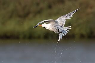 Time to Tern