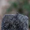 Worm challenge (The eclectic Oneironaut) Tags: 2017 6d canon castillalamancha eos españa guadalajara octubre spain worm gusano leap salto wood madera dof bokeh pelegrina rio dulce