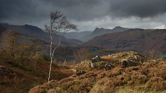 Holme Fell (Paul Newcombe) Tags: holmefell lakedistrict lakes uk landscape england naitonalpark moors hill fell landales pikes langdalepikes autumn 217 tree silverbirch ndgrad cokin 2stopsoft rocks heather larch mountains fells cloudy vista paulnewcomabephotography