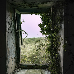 nature reprenant ses droits 2 (Eloïse Humblot) Tags: abandonée maison urbex house plant plante verdure vert green beauty feuille feuillage branche bretagne lumix panasonic gh4 fenêtre entrée porte ouverture