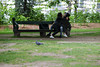 Privacy (Elios.k) Tags: horizontal outdoors people two boy girl teens young inlove hugging kissing kiss inpublic affection lovers bench park parcdebruxelles brusselspark bird pigeon dof depthoffield bokeh colour color green trees grass travel travelling april 2017 spring vacation canon 5dmkii camera photography brussels belgium europe