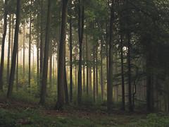 Eifel (Netsrak) Tags: baum bäume eu europa europe forst herbst landschaft natur nebel wald autumn fall fog forest landscape mist morning nature tree trees woods berg rheinlandpfalz deutschland de