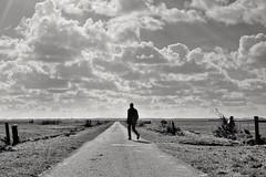 The Long Walk (Mr.White@66) Tags: bw monochrome blackandwhite biancoenero noiretblanc schwarzweiss holland contrejour thenetherlands fujifilm xt2 fujinon minimal vanishingpoint