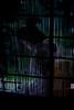 Geiko_20170924_12_15 (Maiko & Geiko) Tags: mumeisha toshimana kyoto maiko 20170924 舞妓 無名舎 とし真菜 京都 geiko 芸妓 mait