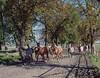 Arabian horse farm in Michałów (fotoswietokrzyskie) Tags: animal grass road horses stallions poland michałów mamiya 7ii kodak portra 160 80mm medium format analog 6x7 arabian horse farm trees