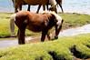 Lacs d´Ayous (Jose Andres B) Tags: {agreguesuspalabrasclavedelimitadasporpuntoycoma} jabrbio ayous lagos lacs caballos