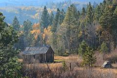 DSC_9185 (Schnauzergal) Tags: fallcolors fallfoliage naturebynikon nature trees california nikon landscape