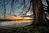 calm stream (bjdewagenaar) Tags: river water waterscape nature tree sunset hdr photography photograph photographer photoshop gorinchem gorcum holland dutch merwede sony sonya58 sonyalpha sonyphotographer sonyimages sigma wideangle raw lightroom