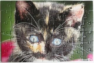 Schildpatt-Kätzchen
