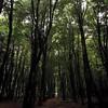 I can feel the darkness within. #tree #dark #horror #spade #dark #light (jessicaamyjordan1) Tags: tree dark horror spade light