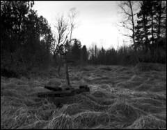0084 2017 Tmax100old (rubbernglue) Tags: chamonix45f1 bw blackandwhite bwfp blackandwhitefilmphotography filmphotography filmexif analog analogexif waterpump grass sunset sweden 2017 sverige hc110 rolleirpx