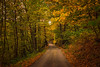 When Autumn Comes.... (marypink) Tags: valvigezzo valledeipittori piemonte autumn fall trees leav path perspective nikond800 nikkor1635mmf40